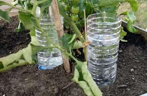 Installez des bouteilles d'eau avant votre départ au pied de vos plantes. © DP