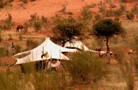 Mauritanie. Deux tentes de nomades installées au pied du massif gréseux de l'Affolé. Le couvert végétal est une steppe arborée.