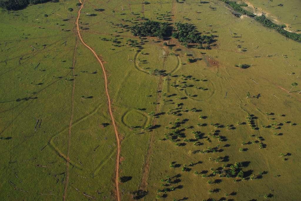 Géoglyphes découverts dans l'Ét d'Acre dans l'ouest du Brésil. La forêt amazonienne qui s'étendait là, il y a encore quelques années, cachait ces étranges structures. © Edison Caetano
