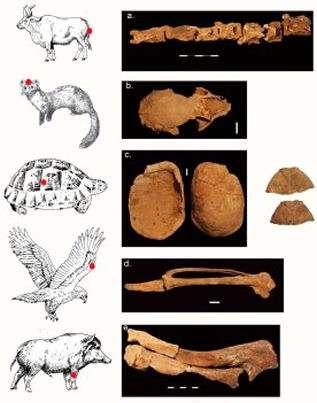 Les détails des restes d'animaux trouvés dans la tombe de la chamane. Crédit : Gideon Hartman.