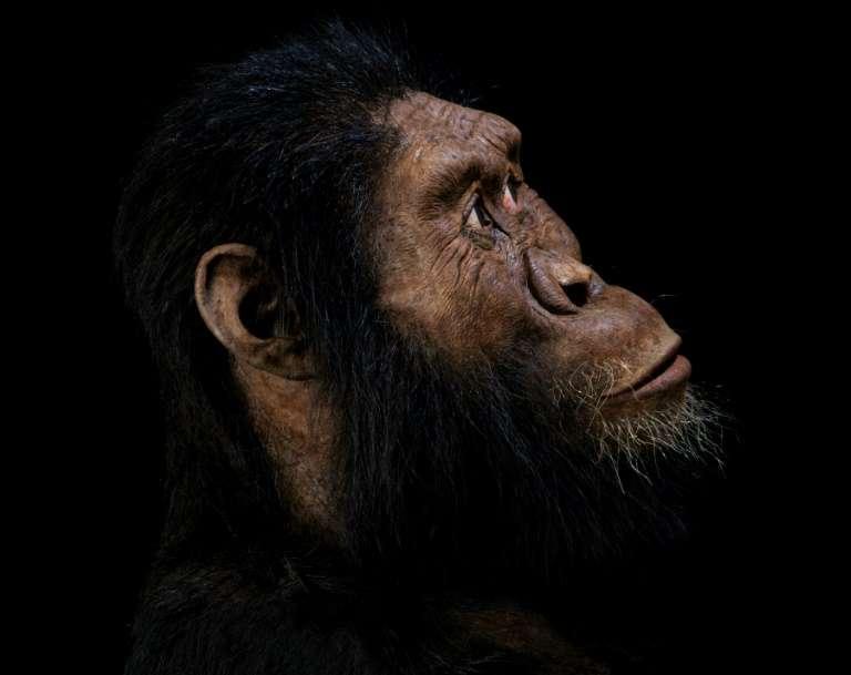 Photo montage réalisé par le Museum of Natural history de Cleveland, reconstituant un visage à partir du crâne d'un Australopithèque découvert en Ethiopie. © HO - Cleveland Museum of Natural History, AFP