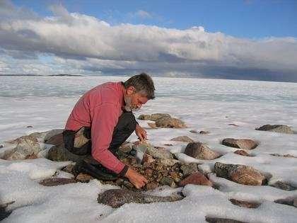 Le chercheur Gifford Miller recueille des racines de plantes, qui jusqu'à il y a encore peu était emprisonnées dans la glace. © Gifford Miller, Université du Colorado