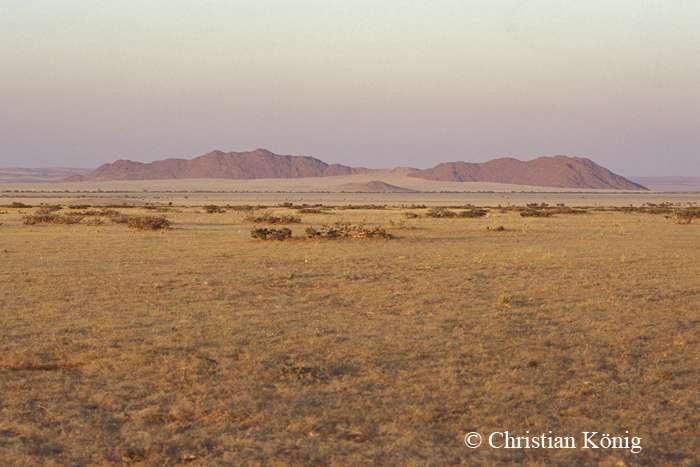 Solitaire est une petite localité du centre de la Namibie à proximité du parc national de Namib-Naukluft. Elle comprend actuellement une station d'essence, un bureau de poste, et le seul magasin (alimentation générale et drugstore) entre les dunes de Sossusvlei, la côte à Walvis Bay et la capitale Windhoek. © Christian König, DR