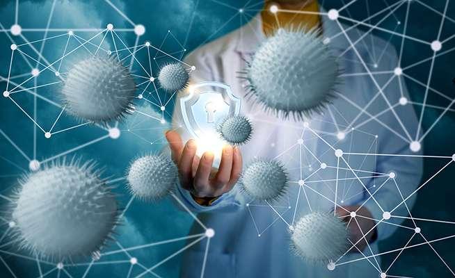 Le staphylocoque doré est l'une des six familles d'agents pathogènes classées en « priorité élevée » par l'OMS. © Natali_Mis, Istock.com
