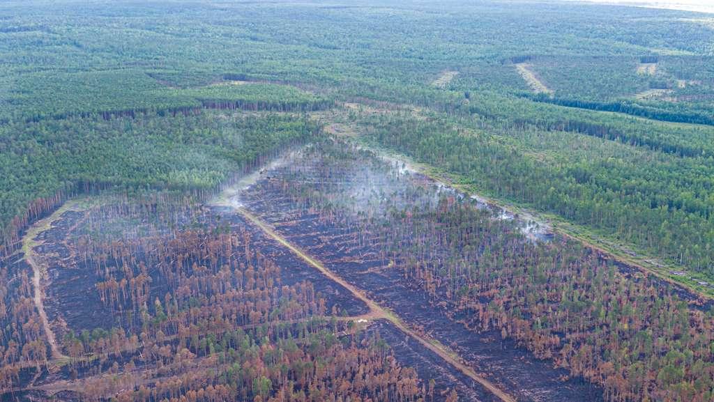 Selon le réseau de surveillance Global Forest Watch, le district de Krasnoïarsk aurait connu une perte de sa couverture forestière de 9,8 % depuis 2000. © Greenpeace