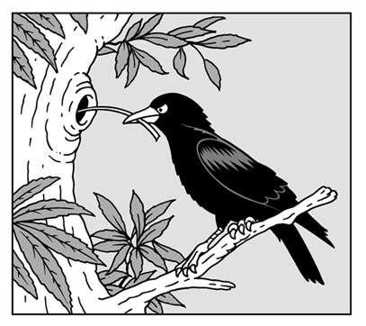 Les oiseaux ont leur propre cortex. © Patrick Goulesque