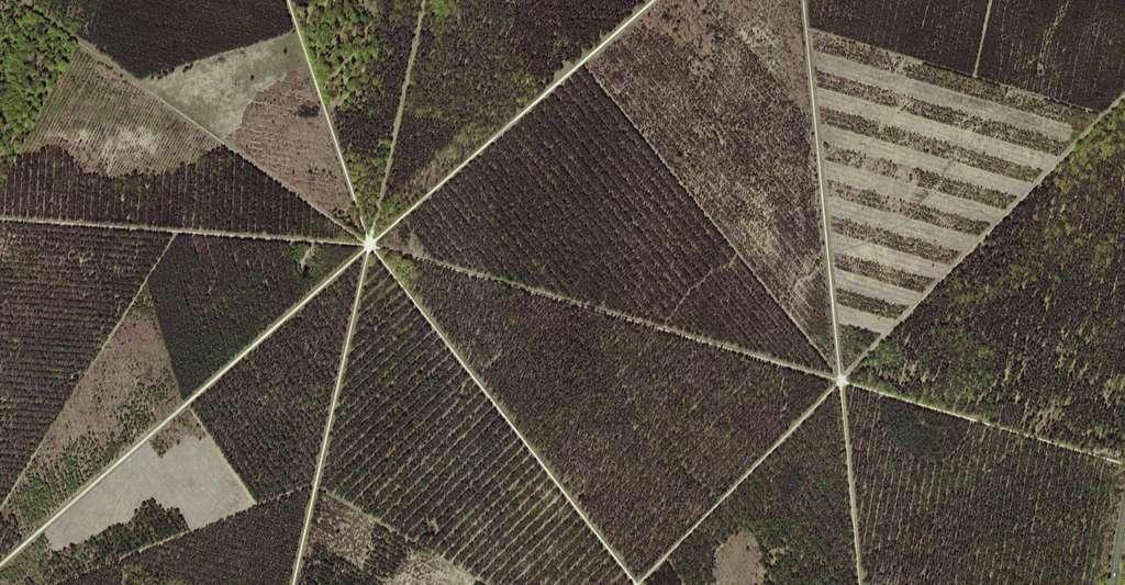 La forêt domaniale d'Orléans recouvrait, par le passé, jusqu'à 150.000 hectares sur une partie de la Beauce et du Gâtinais et la quasi-totalité de l'Orléanais. Elle comporte aujourd'hui quatre massifs parmi lesquels celui de Lorris - Les Bordes, ici en photo aérienne. © GéoPortail, IGN, Nasa, NGA