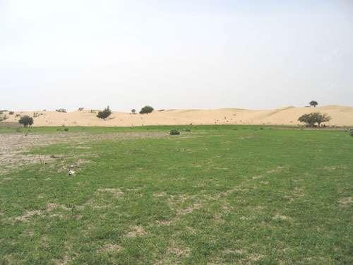 Dune de sable marquant le paléorivage du Mégalac Tchad Holocène. Au premier plan, sols argileux fertiles du fond du Mégalac. Le rivage du lac actuel se rencontre à plus de 100km vers l'est. © IRD - Leblanc, Marc