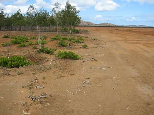 Contact d'un tanne avec des peuplements de filaos ou bois-de-fer (Casuarina equisetifolia) et des buissons de Lumnitzera en Nouvelle-Calédonie © JM Lebigre Reproduction et utilisation interdites