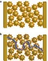 Des nanoparticules (rondes) hérissées de filaments (rouges) sont installées sur un substrat, entre deux électrodes, à gauche et à droite sur ce schéma. En a, le courant électrique ne peut pas passer entre ces dernières. En b, des cations métalliques (points bleus) sont venus se fixer sur les nanoparticules. Un chemin conducteur (ligne bleue) se forme aussitôt par effet tunnel. Entre les deux électrodes, la résistance électrique chute, ce qui peut être mesuré. © Eun Seon Cho et al./Nature Materials
