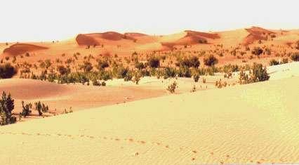 Mauritanie. Sifs de réactivation sur le sommet de cordons longitudinaux dans l'Erg de l'Amoukrouz.