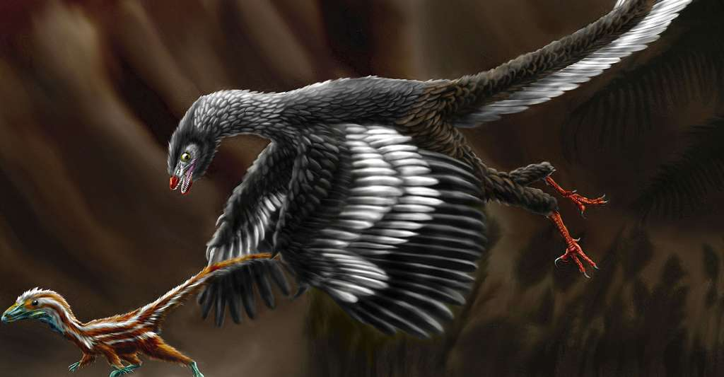 Archaeopteryx attaquant un juvénile Compsognathus longipes. © Durbed, CC by-sa 3.0