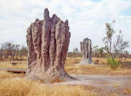 Termitière Australie © Christian Lévêque
