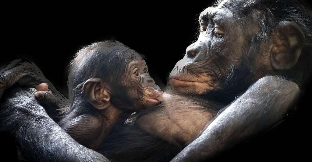 Maman gorille et son petit. © GerMai CCO