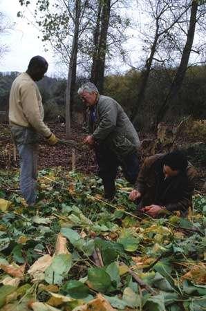 Eradication de plantes envahissantes © CEPA