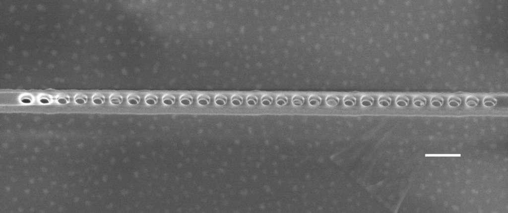 Une image au microscope électronique de la cavité photonique présentant les trous nanométriques gravés dans la couche contenant les centres NV. La barre d'échelle correspond à une longueur de 200 nanomètres. © Evelyn Hu, Harvard