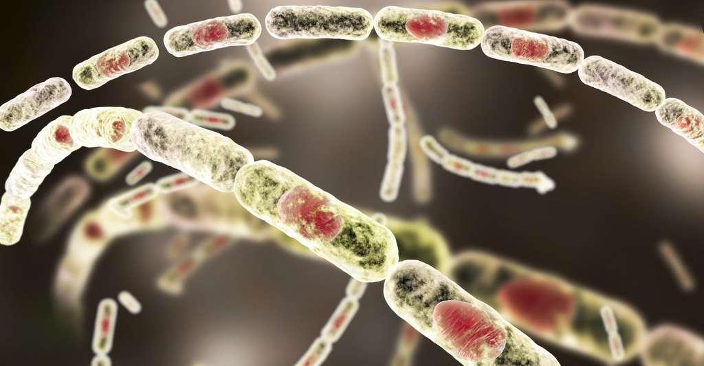 Bacillus anthracis est la bactérie responsable de la maladie du charbon — l'anthrax, pour les anglophones. C'est l'une de celles qui pourraient être libérées par le dégel du pergélisol. © Kateryna_Kon, Adobe Stock