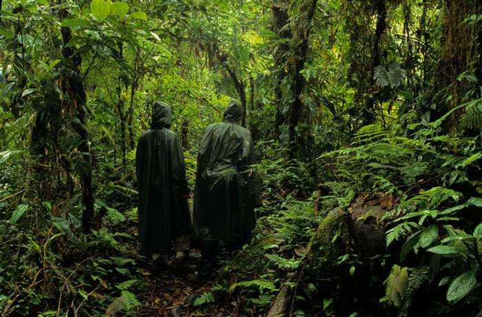 Immersion en forêt tropicale. © Sylvain Lefebvre et Marie-Anne Bertin, DR