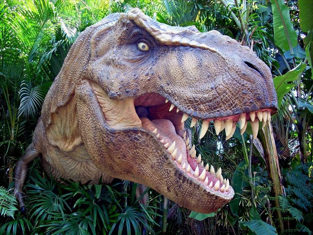 Des dents longues et tranchantes, une mâchoire imposante, un cou puissant… le tyrannosaure disposait du nécessaire pour piocher des morceaux de viande sans avoir besoin de ses membres antérieurs. © Scott Kinmartin, Fotopedia, cc by 2.0