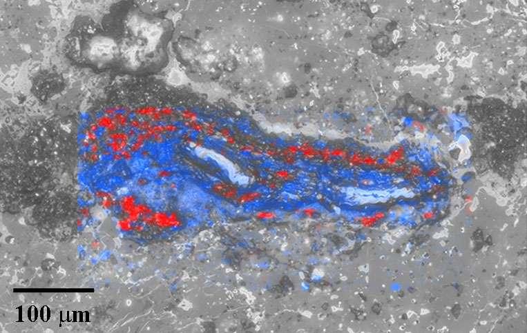 Carte de fausses couleurs de la spectroscopie Raman montrant des diamants (rouge) et du graphite (bleu) dans une ureilite. © Ryan Jakubek et Cyrena Goodrich.