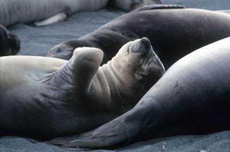 Il n'existe pas un seul être vivant sur Terre – pas un seul ours au pôle Nord, pas une seule grenouille en Amérique du Sud, pas un seul bébé de par le monde – qui ne soit exposé à un cocktail de produits chimiques créés par l'Homme ! © WWF Canon - Sylvia Rubli