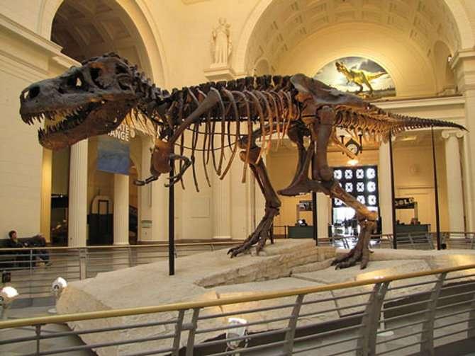 Tyrannosaurus rex « Sue », au muséum de Chicago, dans l'Illinois, aux États-Unis. © Christophe Hendrickx, CC by-sa 3.0