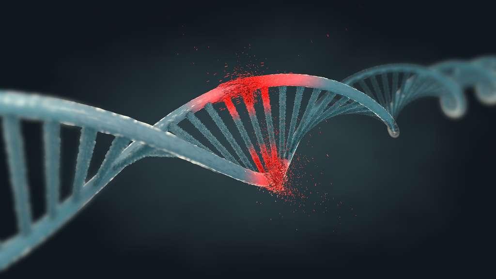 L'activité de certains gènes est influencée par des facteurs extérieurs, comme l'alimentation, l'activité physique ou l'environnement. © Christoph Burgstedt, Fotolia