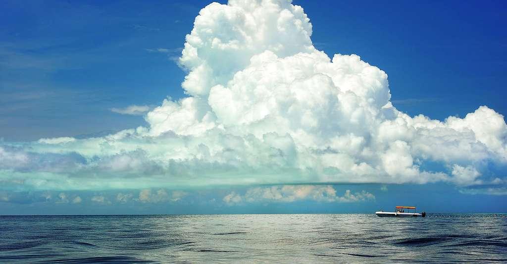 Le vent a une influence sur la circulation océanique. © PublicDomainPictures