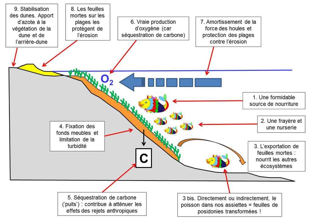 Figure 8.1. Les biens et services écosystémiques que fournit l'écosystème posidonie, numérotés de 1 à 9 (voir texte). © Charles-François Boudouresque - Tous droits réservés - Reproduction interdite