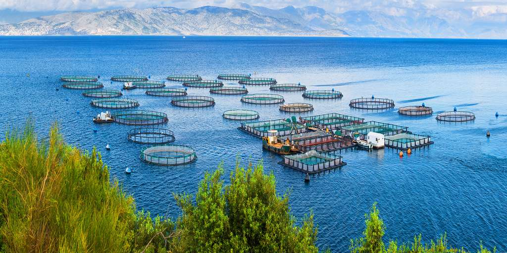 Ferme piscicole de saumons. © Sodel Vladyslav, Adobe stock