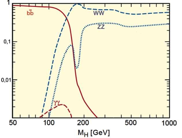 Sur ce schéma sont montrées les importances relatives de certains canaux de désintégration du Higgs en fonction de sa masse éventuelle. On voit ainsi qu'entre 100 GeV et 150 GeV apparaît une bosse exprimant l'importance du canal de désintégration à deux photons gamma (pointillé rouge). Au-delà de 200 GeV le canal caractérisé par la production d'un quark b et d'un antiquark b (courbe rouge) devient complètement négligeable devant ceux avec bosons Z ou W. Bien que ces deux canaux soient fortement favorisés par rapport à celui à deux photons vers 130 GeV, le signal en gamma est moins bruité que le signal en ZZ ou WW. C'est pourquoi, si le Higgs standard existe et a bien une masse entre 115 GeV et 140 GeV, les premiers indices de son existence seront ces photons gamma. © Cern-Konrad Jende