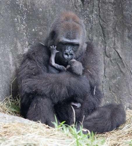 Voici Tumani et son petit. © Institut Audubon Nature