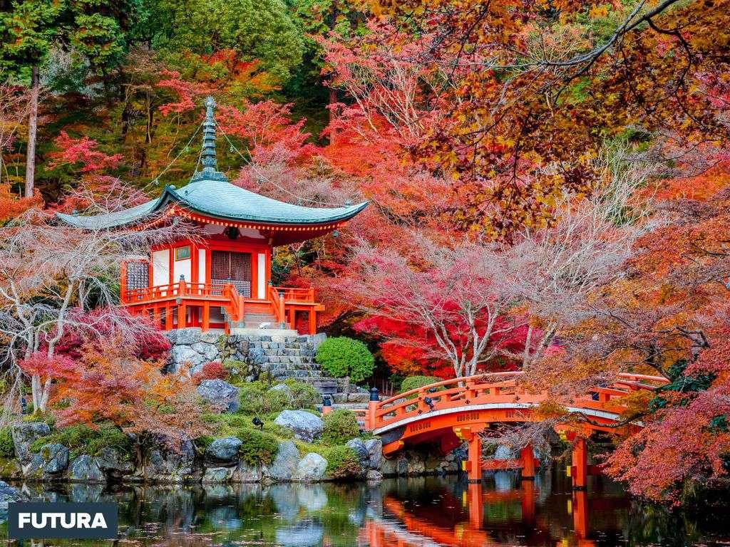 Féerique jardin japonais