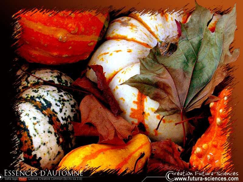 Potirons et citrouilles vous attendent pour un automne tout chaud tout beau.