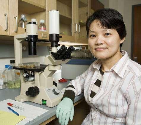 Le joli sourire de Junying Yu, du Primate Research Center de l'université de Wisconsin-Madison, se retrouve aujourd'hui dans de nombreux journaux du monde entier, témoignage du retentissement médiatique des recherches auxquelles elle a collaboré. © Bryce Richter