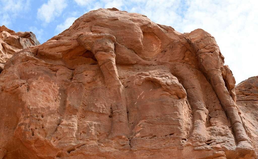 Les sculptures sont érodées mais il est encore possible de discerner des chameaux et des équidés. © AFP