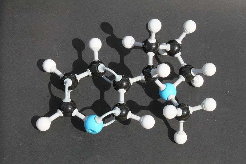 La nicotine se fixe sur les récepteurs d'un neurotransmetteur dans le cerveau. © Bim in Garten, Wikimedia Commons, cc by sa 3.0