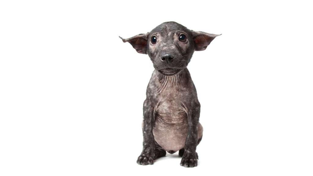 Pip, la chienne galeuse