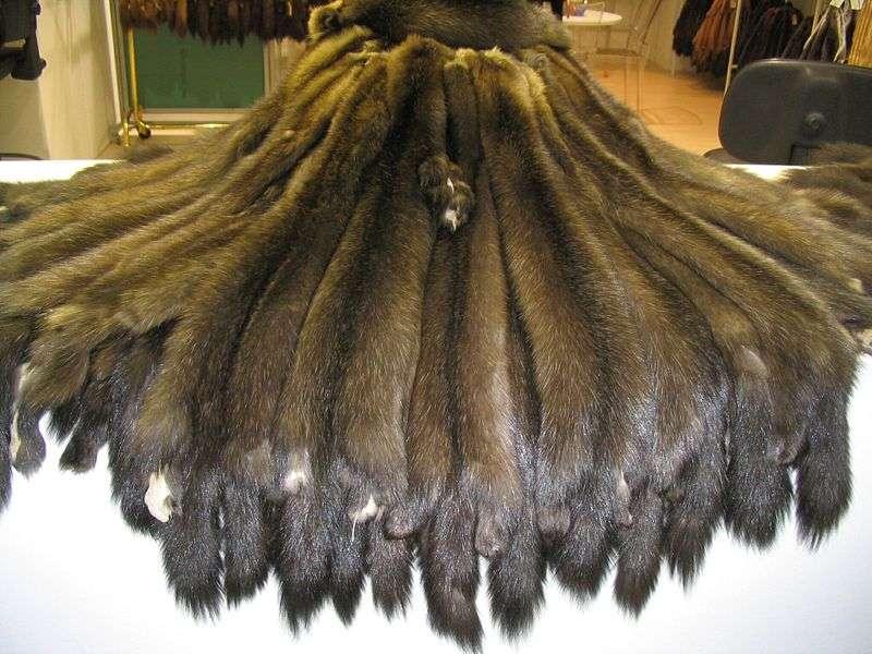 Pelisses de zibelines. © Kuerschner, domaine public
