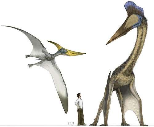 À ce jour, Hatzegopteryx thambema semble être le plus grand reptile volant. Rien que son crâne devait atteindre 3 mètres de long. © Mark Witton CC by-nc-sa 2.0