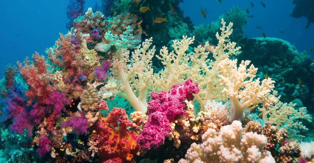 Paysage sous-marin très coloré, coraux, éponges... © Irochka, Fotolia