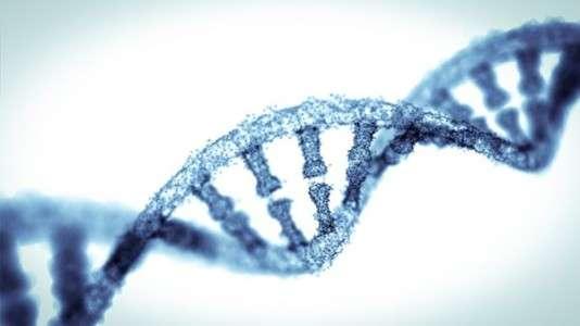 Cette méthode, inspirée d'un mécanisme découvert dans des bactéries, consiste à couper l'ADN à un endroit précis à l'aide d'une enzyme, d'où son surnom de « ciseaux moléculaires ». © from2015 / Istock.com