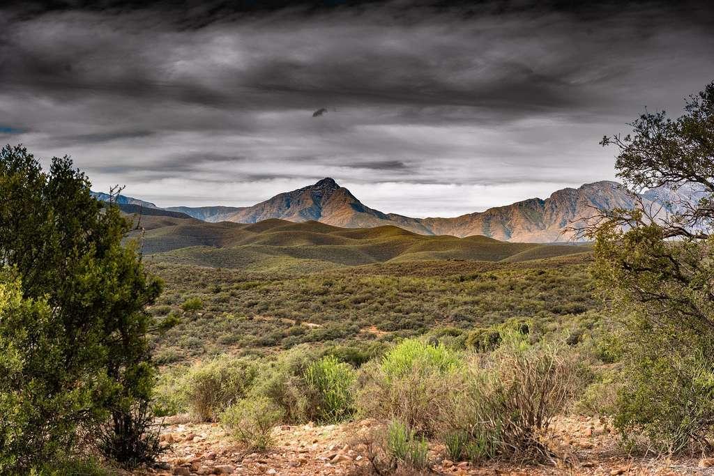 Les prairies, savanes et brousses : des biomes peu gourmands en eau