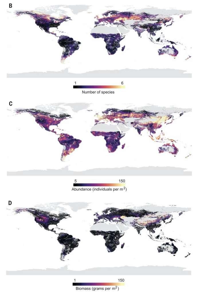 La répartition de vers de terre dans le monde. B : nombre d'espèces. C. abondance (nombre de vers par m2). D. Biomasse totale (g/m2). © Helen Phillips et al., Science, 2019