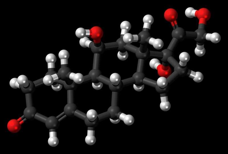 Le stress est l'une des causes de la dépression. Vue en 3D de la molécule de cortisol, également connue sous le nom d'hormone du stress. À trop haute dose, si la victime de stress ne tente pas de changer son mode de vie, l'excès de cortisol va déséquilibrer la chimie du cerveau, ce qui peut contribuer à la pathologie. © Ephemeronium, Wikimedia