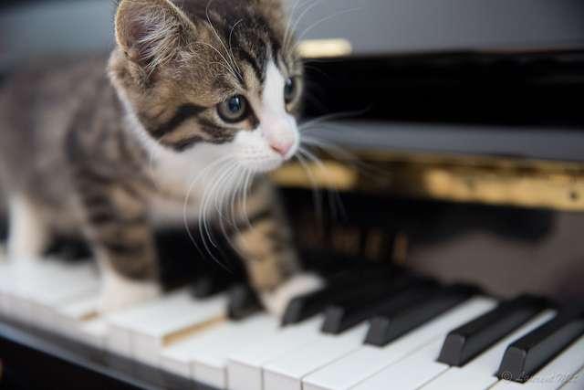Les chats jeunes et âgés semblent les plus sensibles à la musique composée pour eux. © lolo-38, flickr, cc by nc nd 2.0