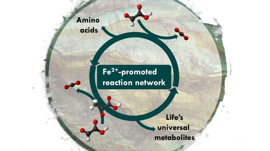 Le vivant accumule des biomolécules qu'il construit à partir du CO2. Puis, il les décompose à nouveau en CO2. Le tout dans un processus complexe et dynamique que des chercheurs sont parvenus à recréer en laboratoire. Sur ce schéma, le réseau de réactions dopé par du fer (Fe2+ promoted reaction network) créant des acides aminés (amino acids) et les métabolites universels de la vie (life's universal metabolites). © Université de Strasbourg