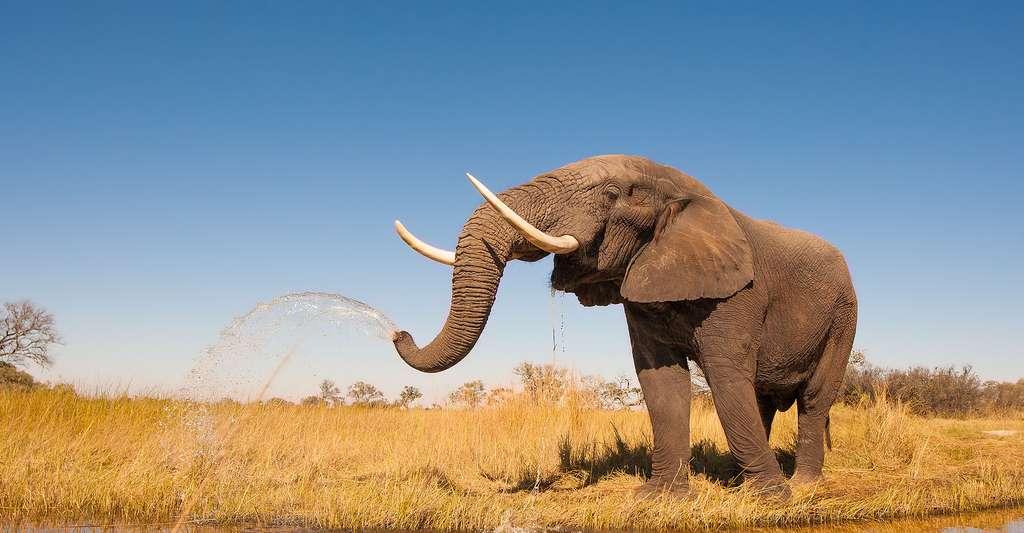 Portrait éléphant, Namibie. © Donovan van Staden - Shutterstock