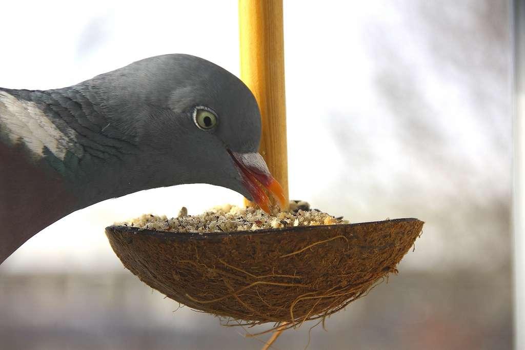 À manger ! Dans de nombreuses expériences de renforcement positif chez l'animal, on utilise la nourriture, considérant que cela va le motiver pour participer. Il ne faudrait pas pour autant résumer un être vivant à cela ! © gynti_46, Flickr, cc by nc sa 2.0