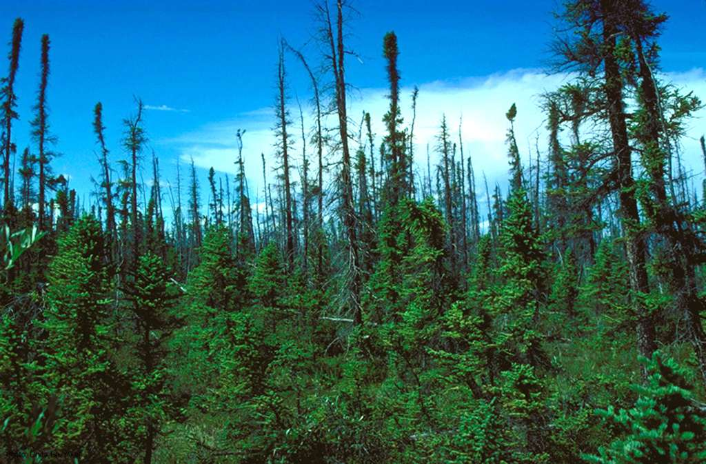 Taïga d'Alaska. © Domaine public